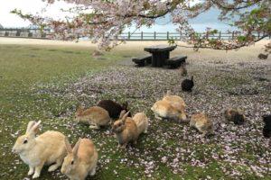 """Okunoshima """"Rabbit Island"""" is literally a bunny paradise"""