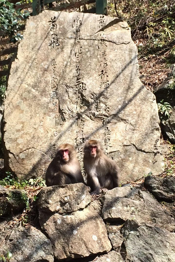 Picture of a rock with writing on it and two monkeys sitting at its front