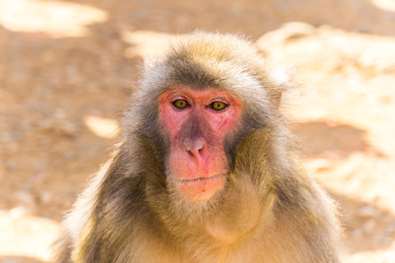 Monkey magic in Arashiyama Monkey Park Iwatayama