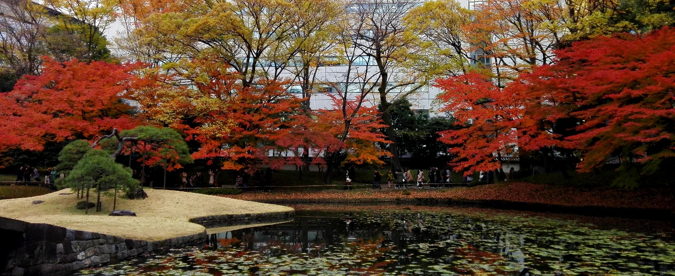 A wide view of the gardens with their autumn colours