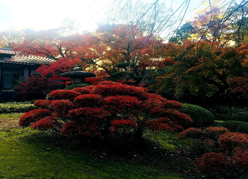 A photograph of the gardens with their red colours