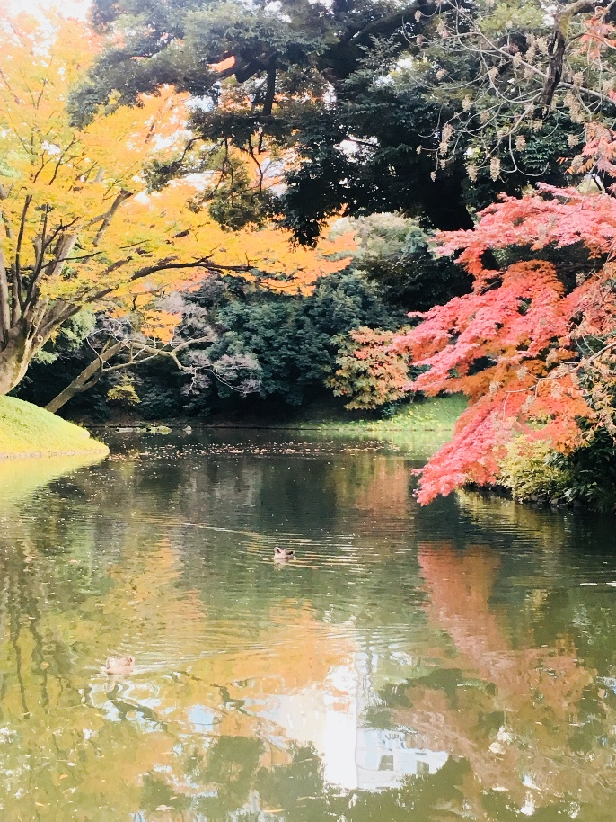 A photograph of a lake framed by red and yellow leaves