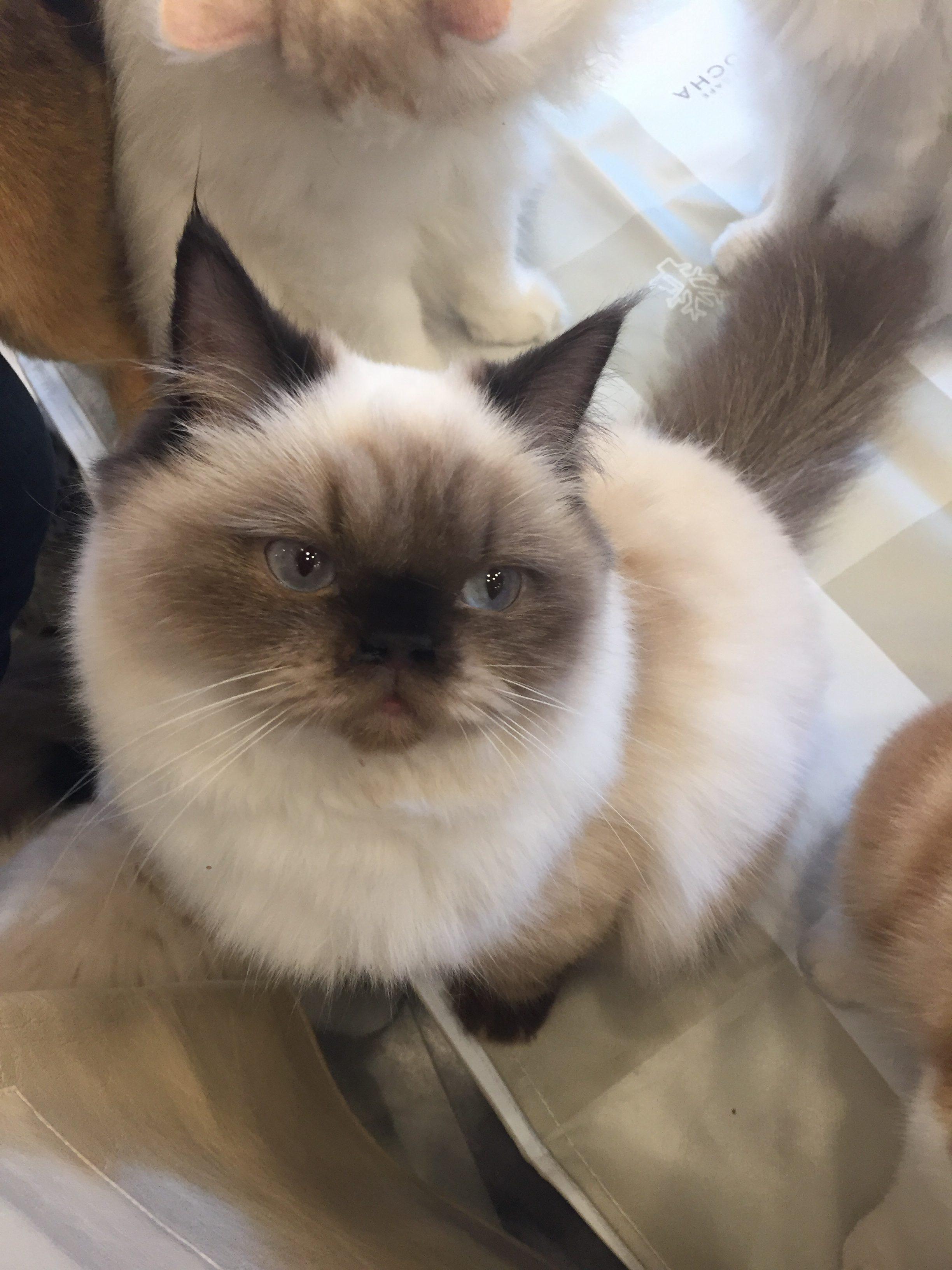 a cat looking into the camera