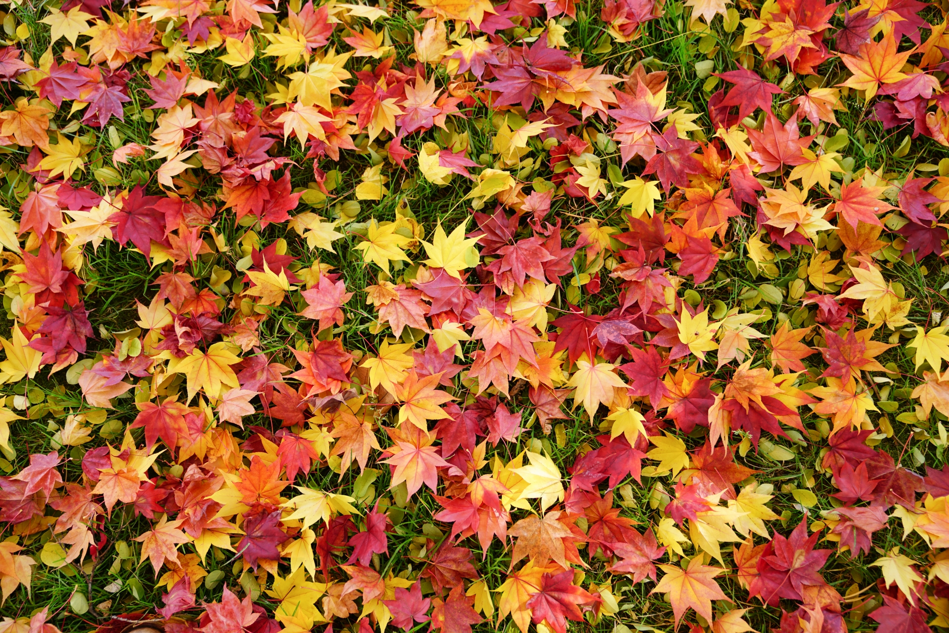 Autumn is coming… How to enjoy fall foliage in the heart of Tokyo