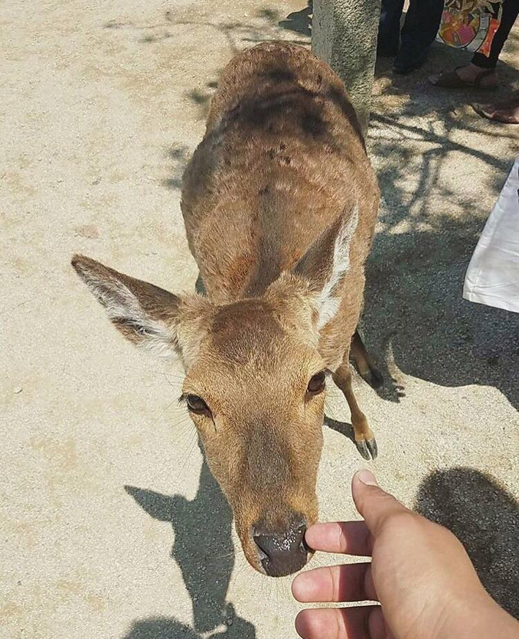 A person holding out a hand to a deer