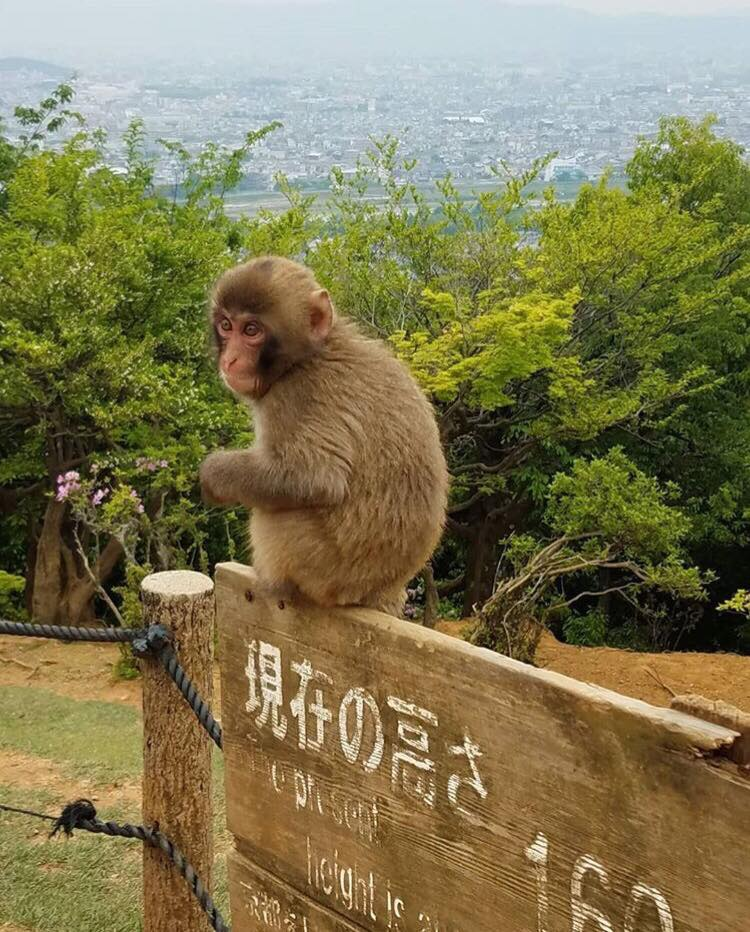 picture of a monkey sitting on top of a sign-post