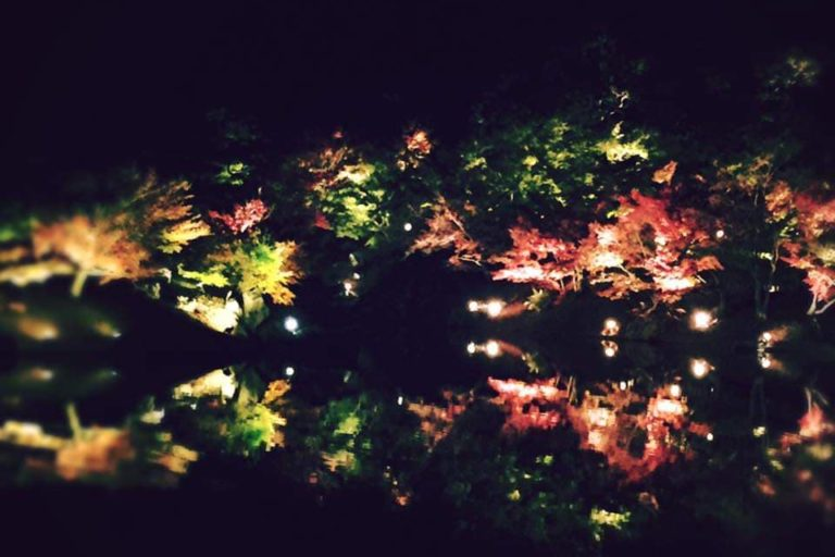 A picture of the lit up Ritsurin Garden
