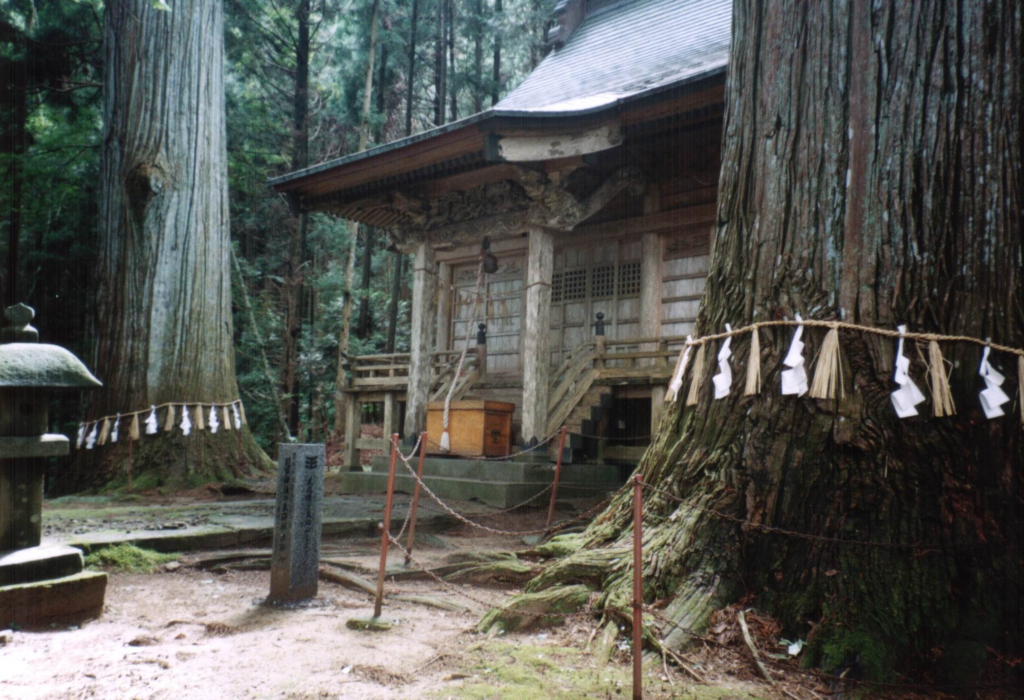 Picture of the two large trees by the side of the shrine