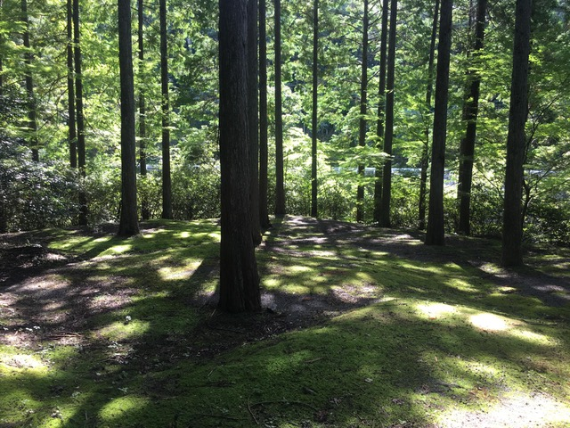 Picture of a forested area of one of the trails