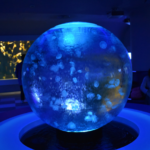 goldfish swimming in a sphere tank