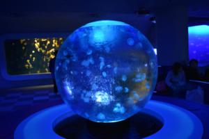 Three mesmerizing artistic aquariums around Tokyo
