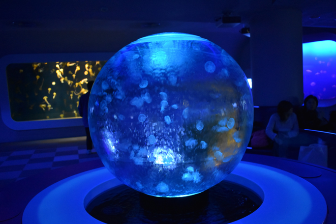jellyfish swimming in a sphere tank