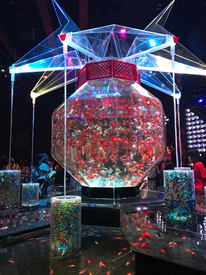 goldfish swimming in a hexagonal tank