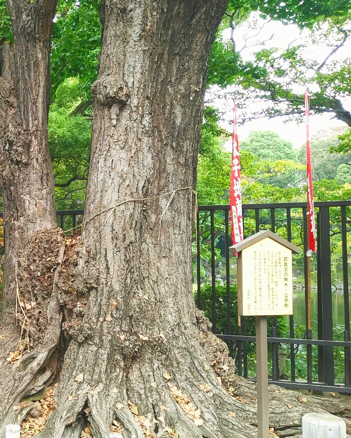 Picture of the sacred tree of Chingodo